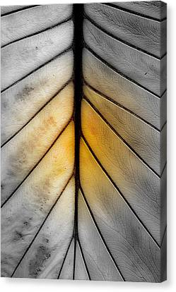 Ribs Canvas Print