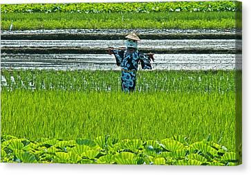 Rice Field - Okinawa Canvas Print