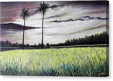 Rice Field  Canvas Print by Usha Rai