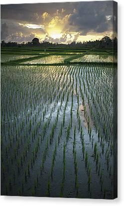 Rice Fields, Near Ubud Bali, Indonesia Canvas Print by Huy Lam