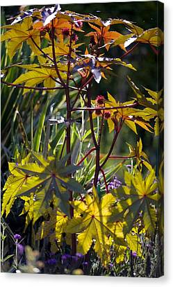 Ricinus Communis 'gibsonii' Canvas Print by Dr Keith Wheeler