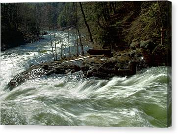 Riding The River Canvas Print by Karol Livote