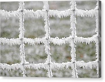 Rime Covered Fence Canvas Print