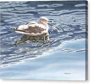Ringed Bill Gull Canvas Print by Richard De Wolfe