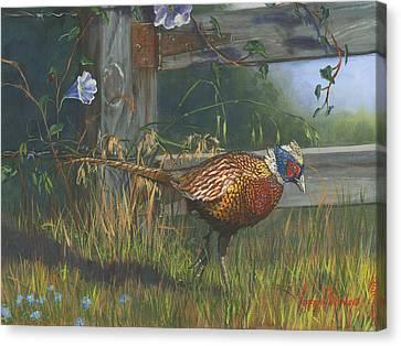 Ringneck Pheasant Canvas Print by Jeff Brimley