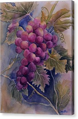 Ripening On The Vine Canvas Print