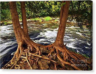River And Roots Canvas Print by Elena Elisseeva