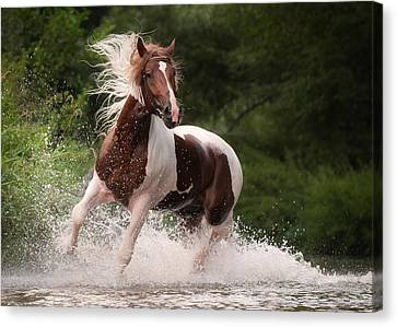 Canvas Print - River Horse by Tanya Kozlovsky