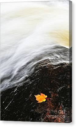River In Fall Canvas Print by Elena Elisseeva