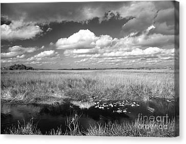 River Of Grass - The Everglades Canvas Print by Myrna Bradshaw
