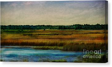 River Of Grass Canvas Print by Judi Bagwell