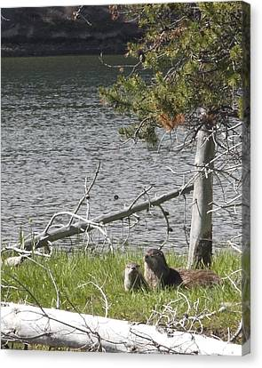 Canvas Print featuring the photograph River Otter by Belinda Greb
