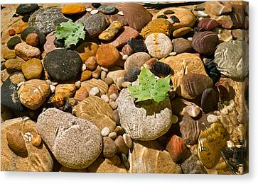 River Stones Canvas Print by Steve Gadomski