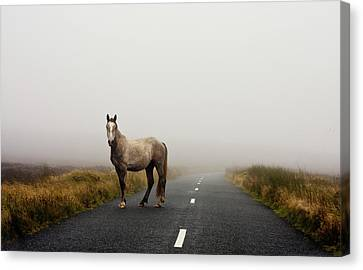 Road Canvas Print by Deirdre Marie Photography