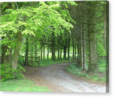 Canvas Print featuring the photograph Road Into The Woods by Charles and Melisa Morrison