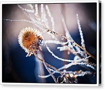 Road Side Plant Canvas Print