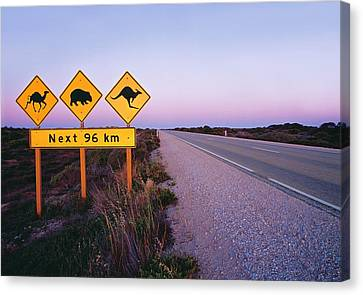 Kangaroo Canvas Print - Road Signs On The Eyre Highway Near Eucla, Nullarbor National Park, South Australia by Peter Walton Photography
