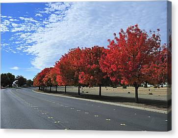 Road To Fall Colors Canvas Print by Richard Leon
