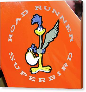 Roadrunner Canvas Print by Guy Whiteley