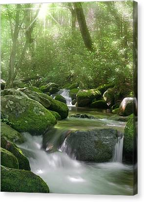Canvas Print featuring the photograph Roaring Fork by Cindy Haggerty