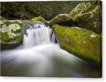 Roaring Fork Great Smoky Mountains National Park - The Simple Pleasures Canvas Print by Dave Allen