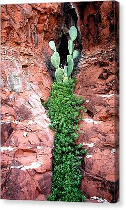 Rock And Cactus Canvas Print by Barry Shaffer