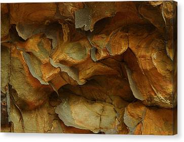 Rock Canvas Print by Daniel Reed