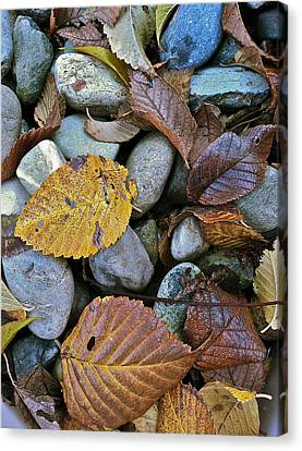Rocks And Leaves Canvas Print by Bill Owen