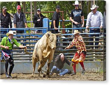 Rodeo Clowns To The Rescue Canvas Print by Sean Griffin