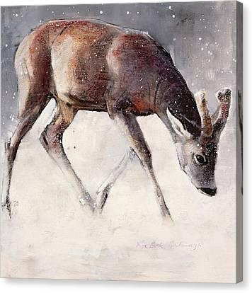 Roe Buck - Winter Canvas Print by Mark Adlington