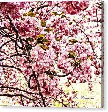 Romantic Cherry Blossoms Canvas Print by Georgiana Romanovna