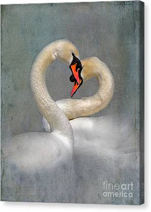 Romantic Image Of Courting Swans Canvas Print