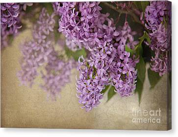 Romantic Lilac Canvas Print