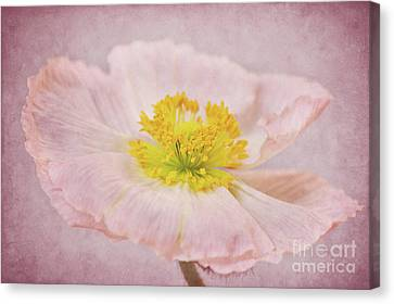 Romantico Canvas Print by Angela Doelling AD DESIGN Photo and PhotoArt