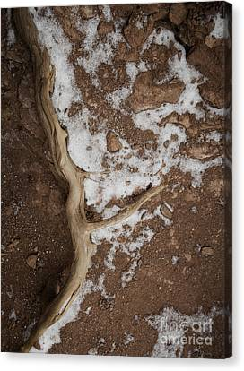 Root And Snow Canvas Print