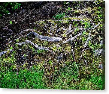 Roots Canvas Print by Randall Weidner
