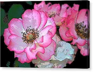 Rose 129 Canvas Print by Pamela Cooper