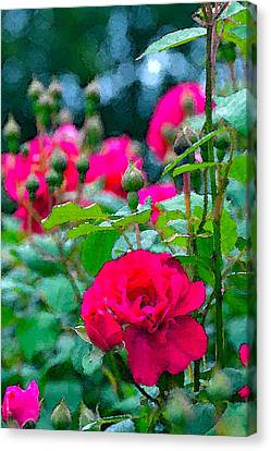 Rose 132 Canvas Print by Pamela Cooper
