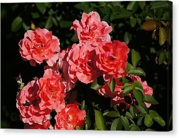Rose Bouquet Canvas Print by Bj Hodges