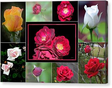 Canvas Print featuring the photograph Rose Collage 001 by George Bostian