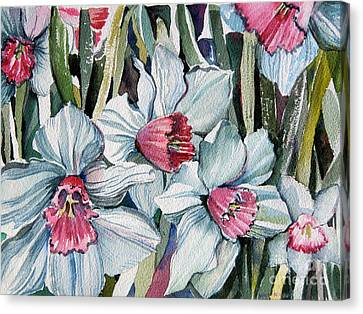 Rose Cupped Daffodils Canvas Print by Mindy Newman