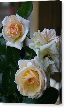 Canvas Print featuring the photograph Rose by Denise Moore