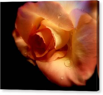 Rose Drops Canvas Print by Cindy Wright