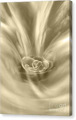 Canvas Print featuring the digital art Rose From A Dream by Johnny Hildingsson