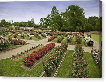 Rose Garden Park Canvas Print by M K  Miller