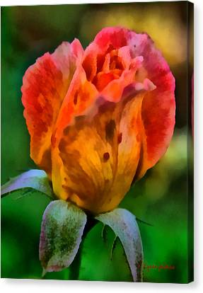 Rose Canvas Print by Lynne Jenkins
