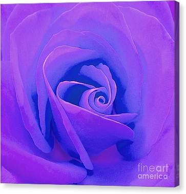 Rose Micro 4 Canvas Print by Cindy Lee Longhini