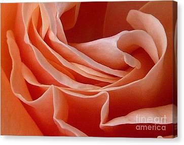 Rose Of Heart Canvas Print by Bernard MICHEL