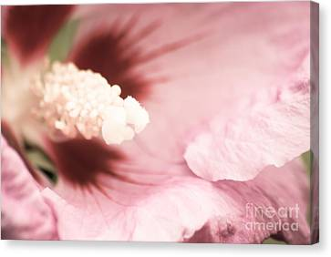 Rose Of Sharon Canvas Print by Hannes Cmarits