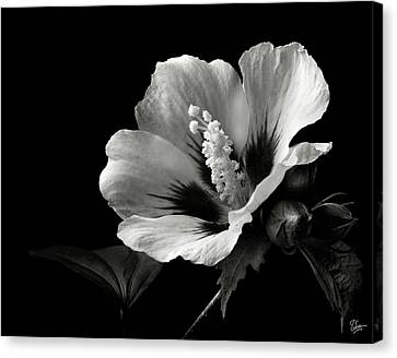 Rose Of Sharon In Black And White Canvas Print by Endre Balogh